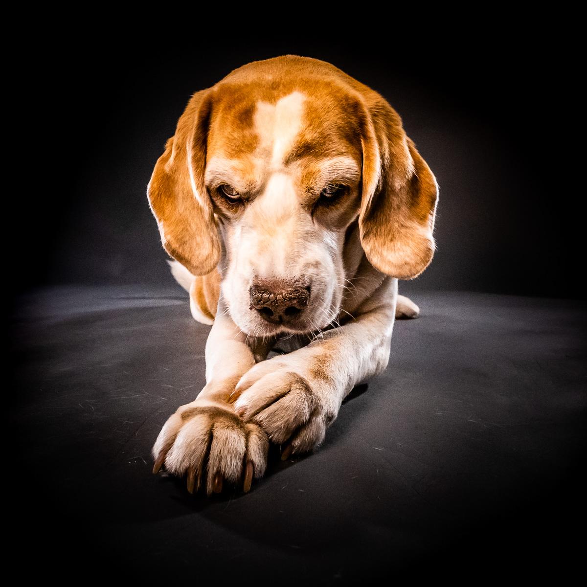 Hundefotograf Recklinghausen & Marl